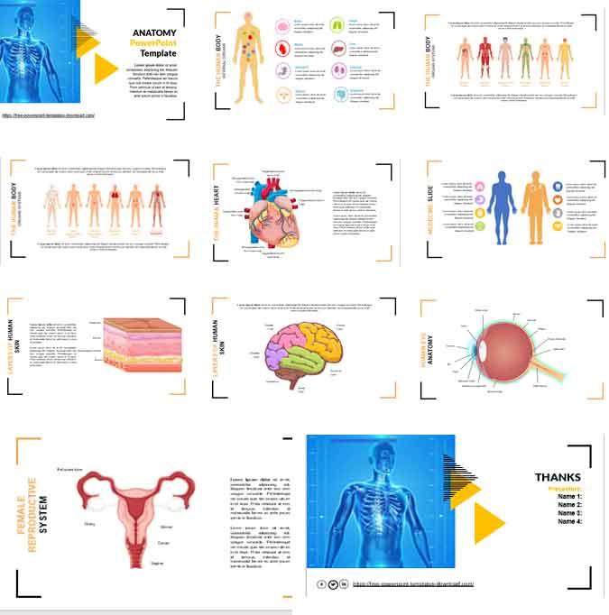 Pantallazos plantilla de powerpoint de anatomia gratis