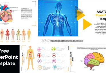 plantilla de powerpoint de anatomia gratis